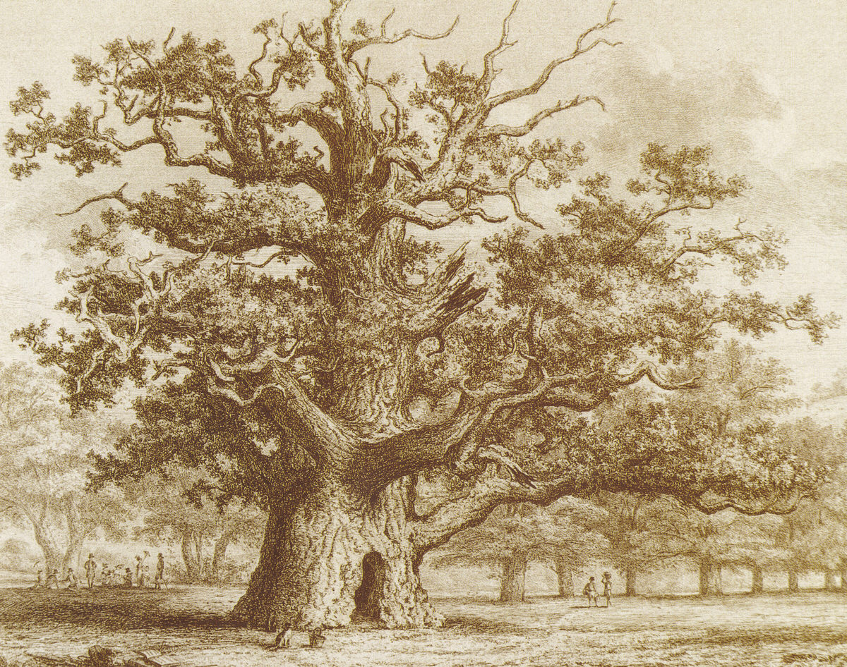Sidneys Oak ancient tree painting by Jacob Strutt in  medieval penshurst place near London, England 1822